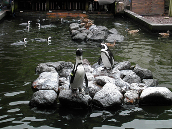 ペンギンプール1