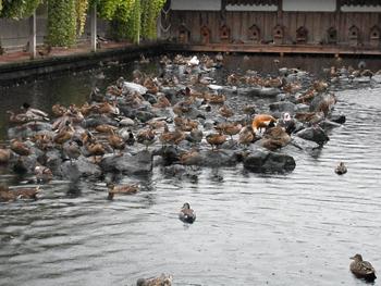 水鳥プール1