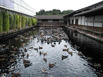 水鳥プール2