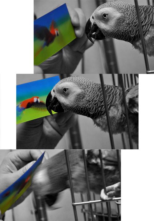 Jean-Lucと動く鳥さん