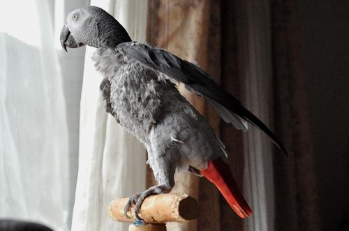 翼を持ち上げるJean-Luc