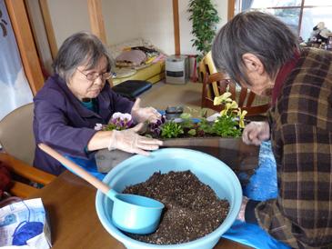 花の苗植え付け5