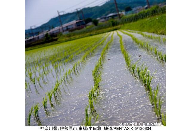 s-よこ-03
