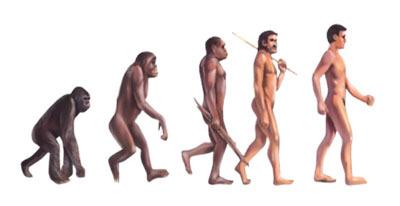 人類の進化 画