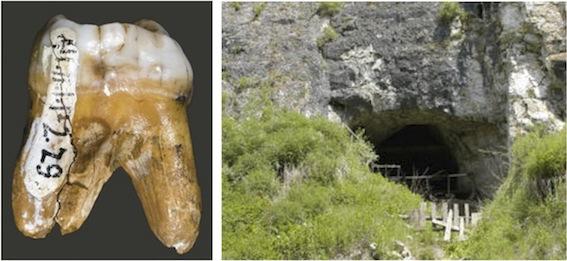 デニソワ人の歯とデニソワ洞窟