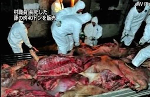 病死した豚の肉を羊として販売