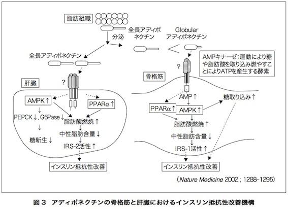 アディポネクチン論文 図3
