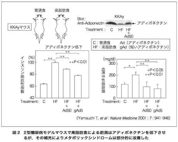 アディポネクチン論文 図2