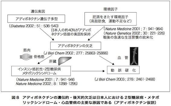 アディポネクチン論文 図8