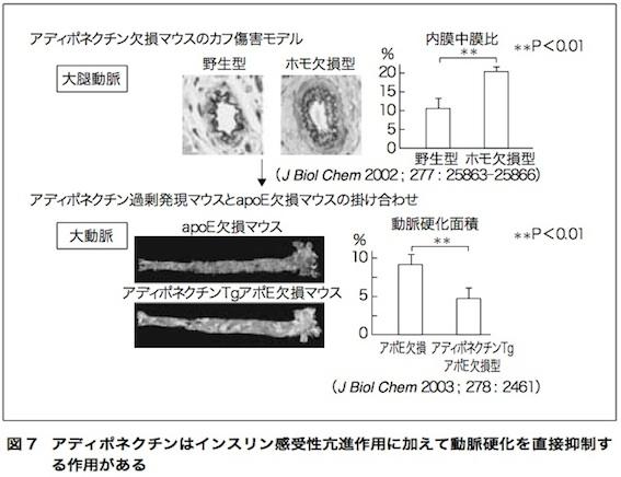 アディポネクチン論文 図7