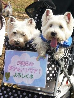 アン&ノンちゃん