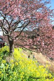 みなみの桜93a