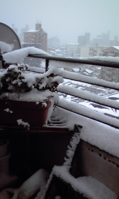雪サンコミ6、110117_0922~01