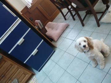 冷蔵庫ぎん2