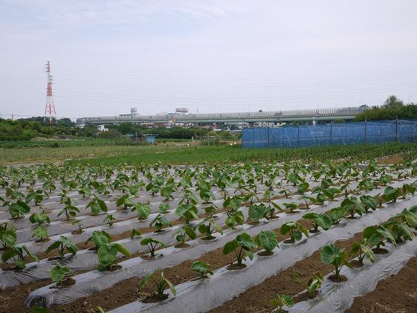 201006長津田 (126)★