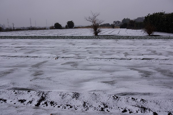 201102r東方 (8)