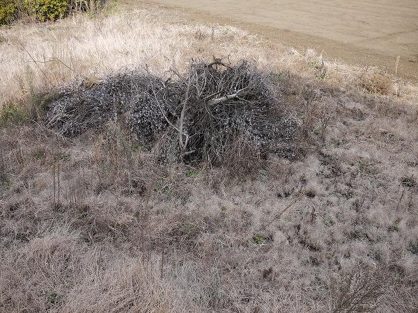 201001池辺 (66)