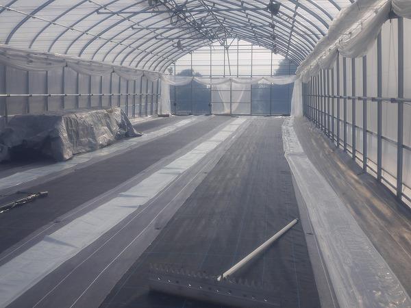 201001池辺 (4)