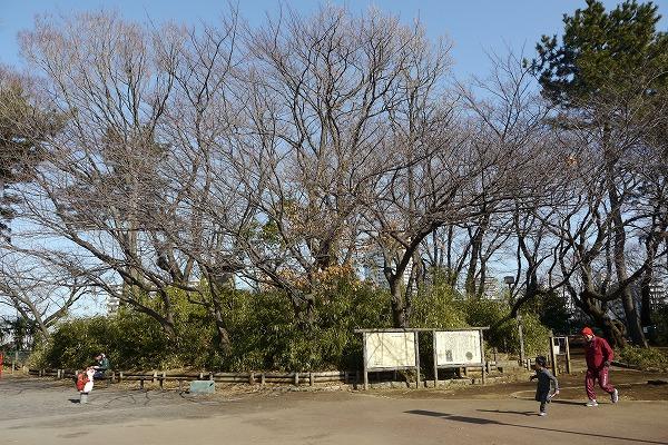 加瀬山2011