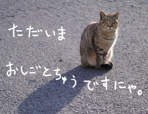 neko_work01.jpg