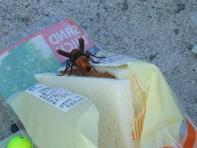 スズメバチ4