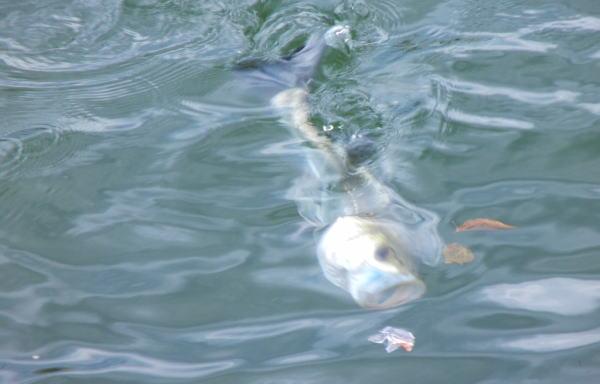 チラッ! と魚が見えたものの ・・・