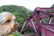 ひじきとあやとり橋