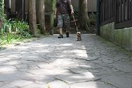 ひじき歩く
