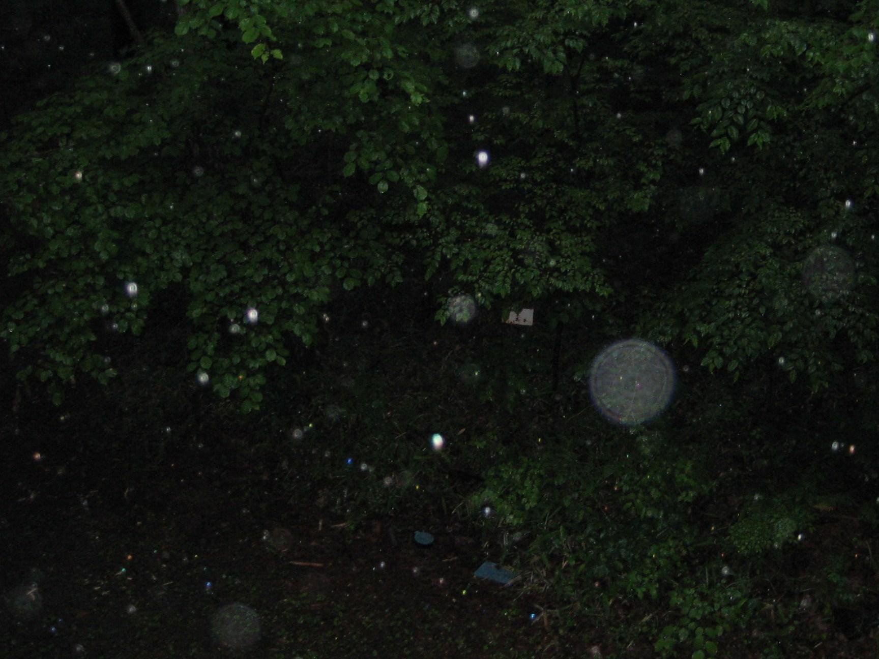 山梨森の木霊2