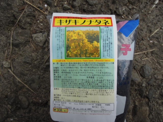 キザキノナタネの栽培 H2610