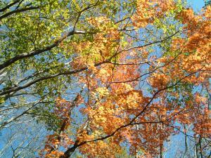 nasu2011+015_convert_20111028132735.jpg
