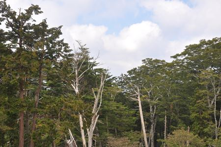 oodaigahara012_R.jpg