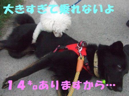 20100703-8.jpg