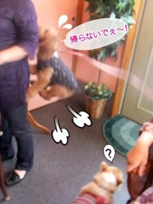 2011_0531(008).jpg