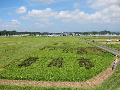 2011_0910田んぼアート0005