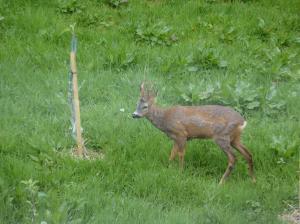 鹿 from my room 3