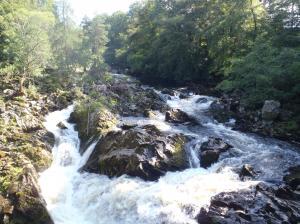 サーモンの見える川