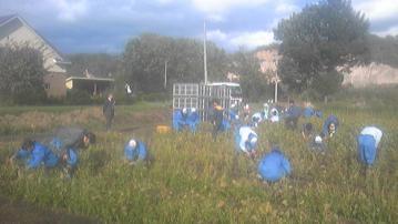 サヤインゲン収穫