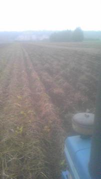 ジャガイモ収穫あと少し
