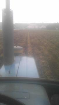 ジャガイモ収穫最後1本