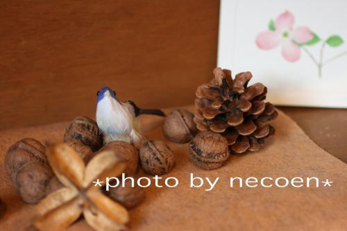 小鳥と木の実