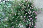 DSC_0350_convert_20110602095844.jpg