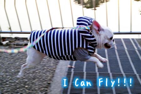icanfly.jpg