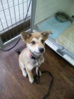 2010.9.19保護犬♂