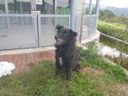 黒迷い犬2010.10.11