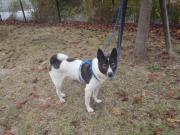 白黒犬2010.11.12