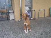 迷い犬 安浦 2010.11.12