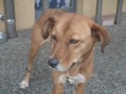 迷い犬 茶白2010.11.12