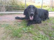 迷い犬2011.11.27
