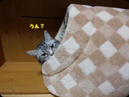おやすみ中3